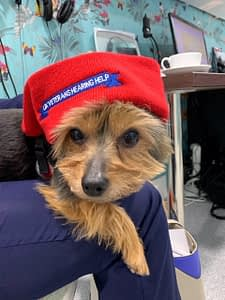 Read more about the article Mascot Louis Models UKVHH Hat