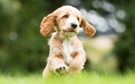 Read more about the article Let's not take things for granted Part 5 – A puppy is not just for Christmas
